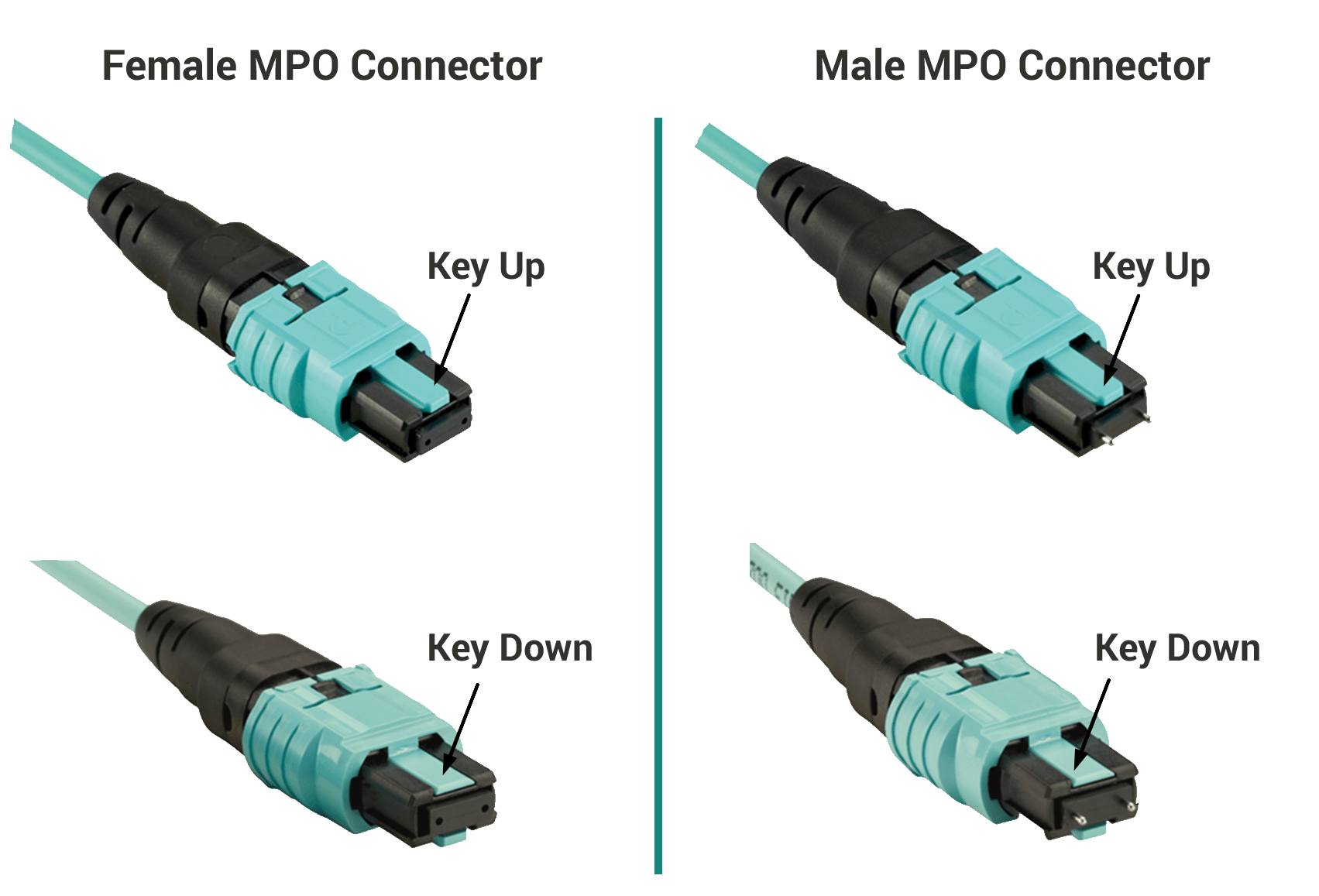 male and female MPO/MTP connecotrs